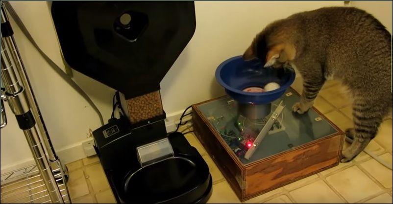 Кот научился включать аппарат для дозирования корма