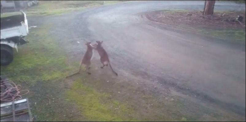 Как прошел день ВДВ в Австралии