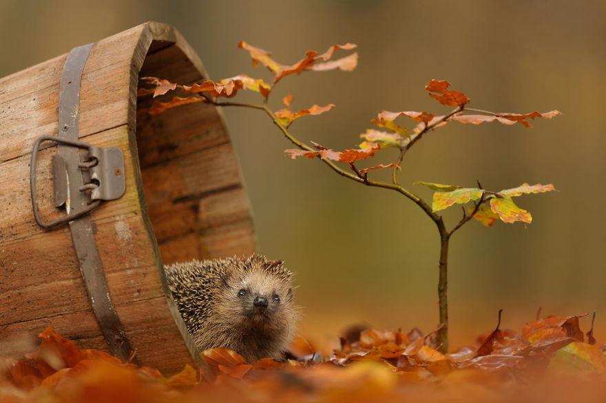 نتيجة بحث الصور عن صور الخريف متحركه