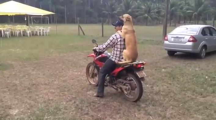 Трогай, шэф!