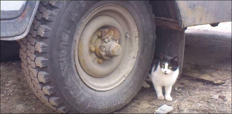 Том и Джерри в реальной жизни