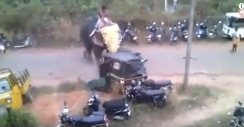 Злой слон разбил 27 транспортных средств в Палаккаде