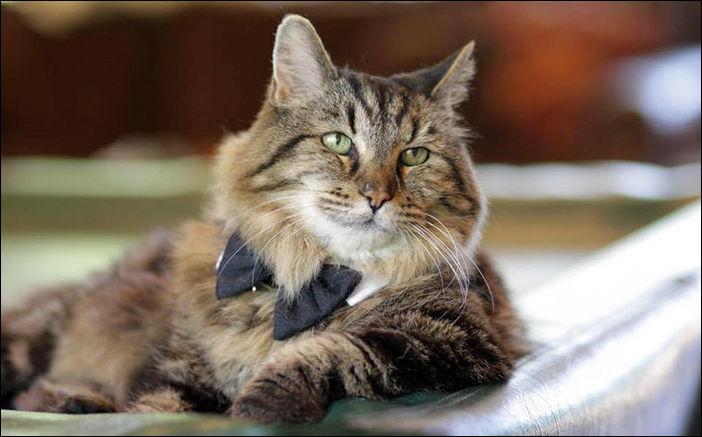 Самый старый кот в мире (12 фото)