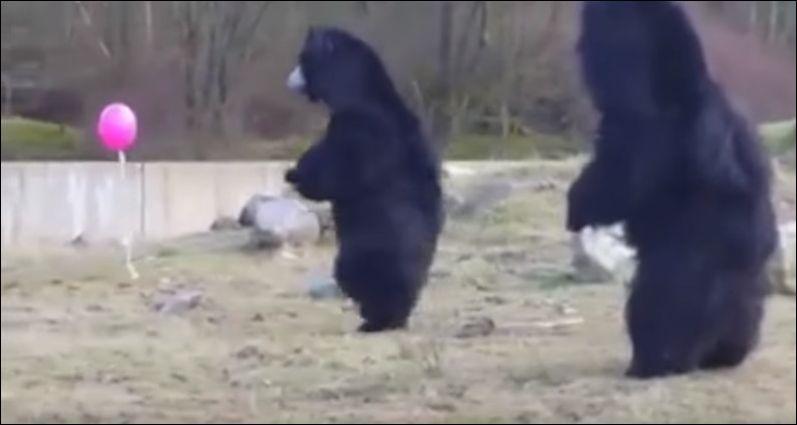 Три медведя и воздушный шарик