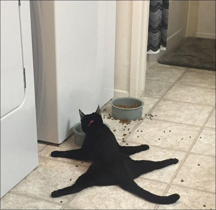 12 примеров странной кошачьей логики