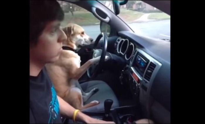 Собаки, которые вас развеселят