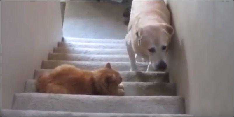 Ты не пройдешь!