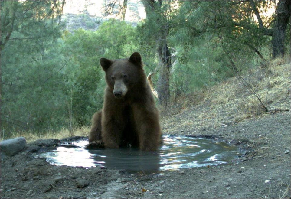 bear-bad-003