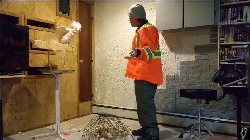 Реакция попугая, когда сломали его клетку