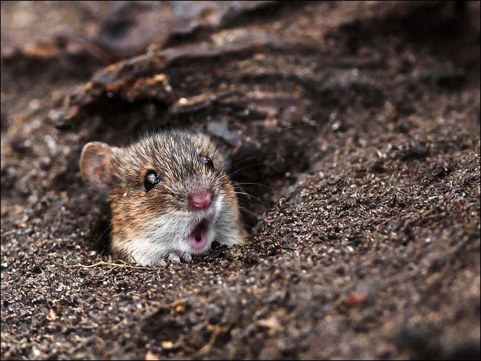 Ошеломление на мордах животных (20 фото)