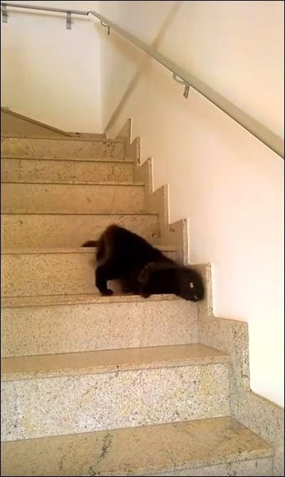 Ленивый кот спускается по лестнице