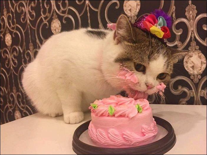 cat-cake-001