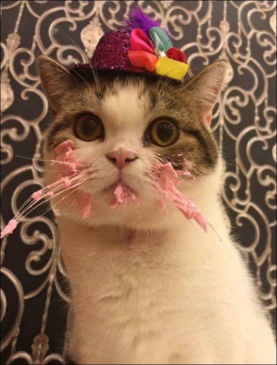 cat-cake-004