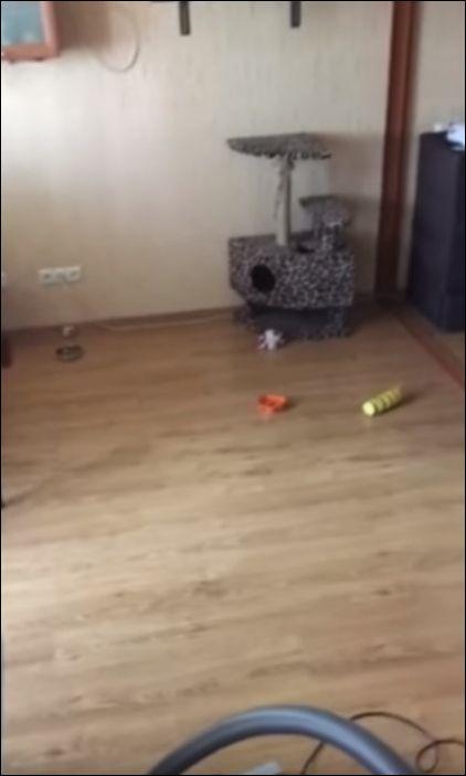Кот забрался под натяжной потолок