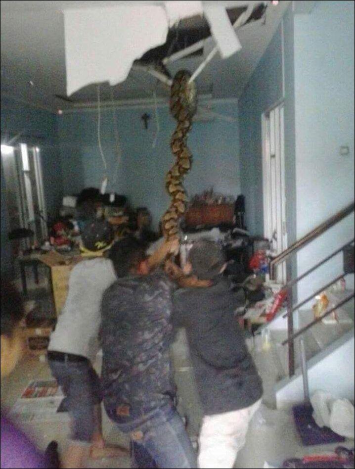 python-ceiling-001
