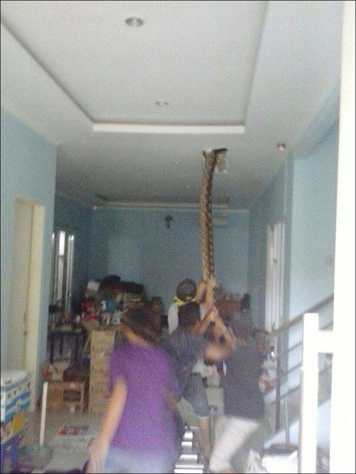 python-ceiling-002
