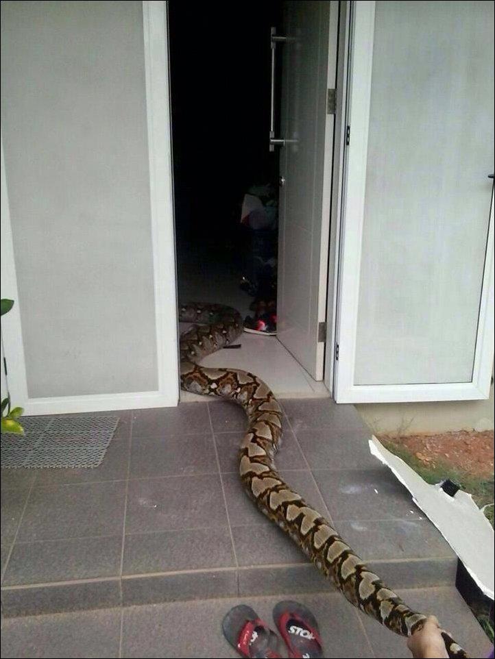 python-ceiling-003