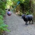 Тетербол в лесу