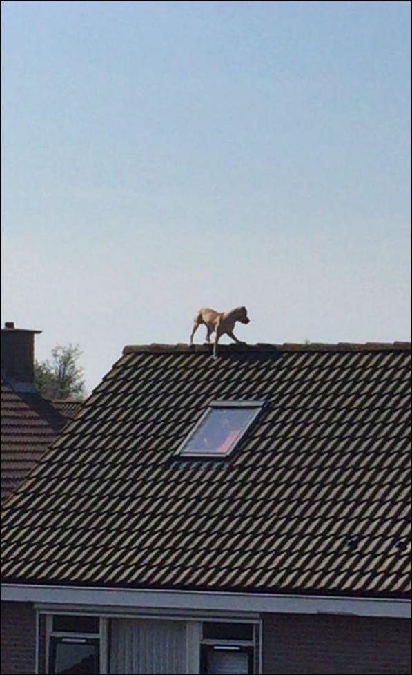 watchdog-002