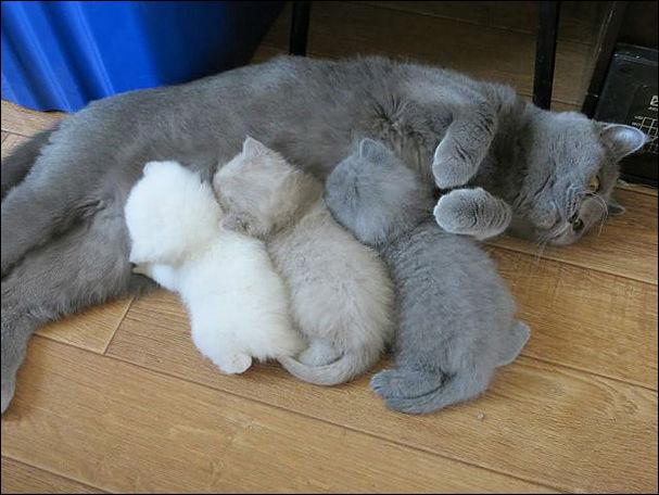 animal-motherhood-002