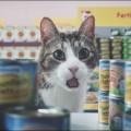 Котики в супермаркете