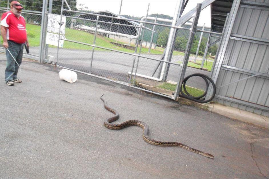 python-002
