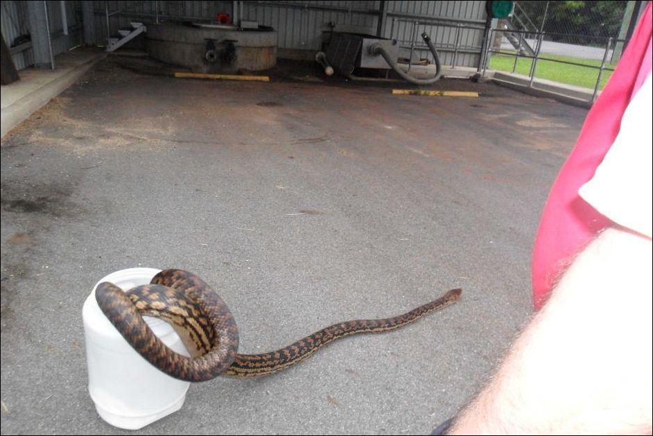 python-003