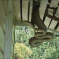 python-004