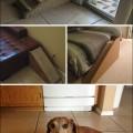 dog-owner-creative-010