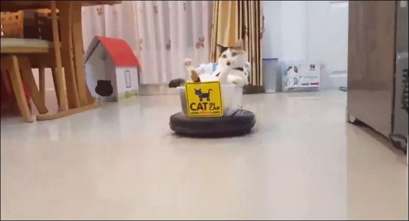 catmobil