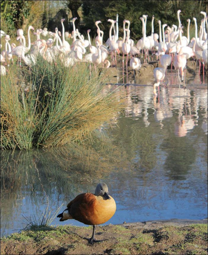 ducks-008