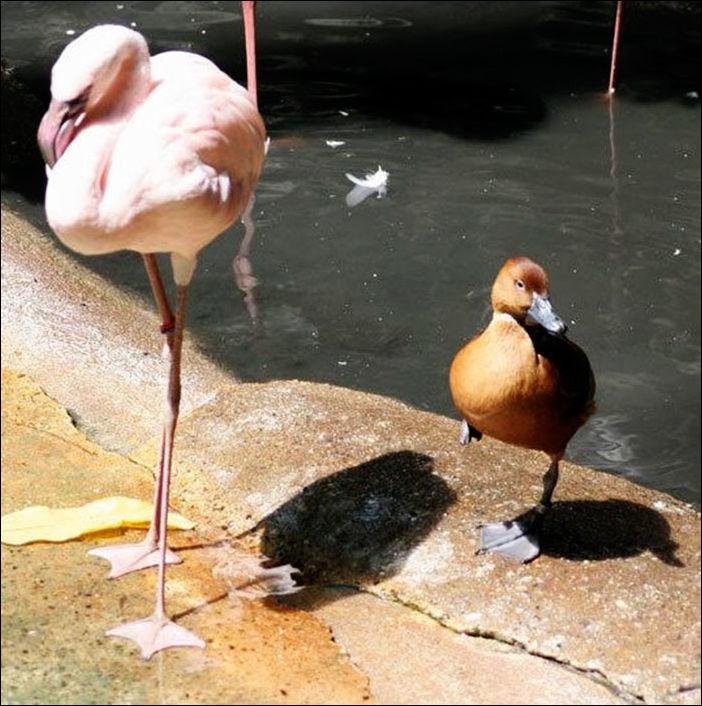 ducks-009