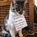 guilty-cat-001