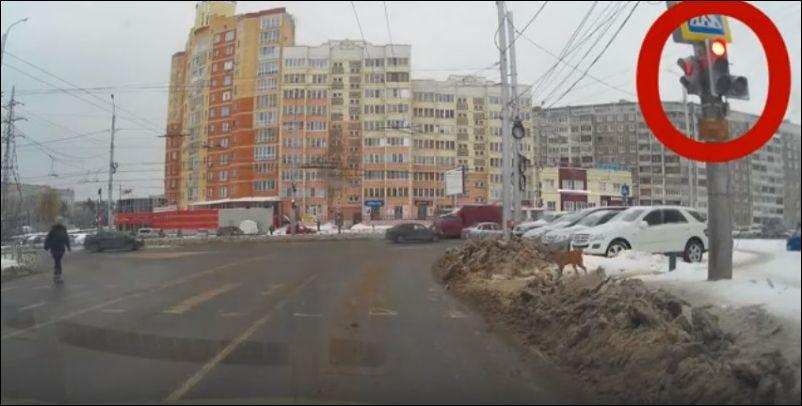 dog-pedestrian