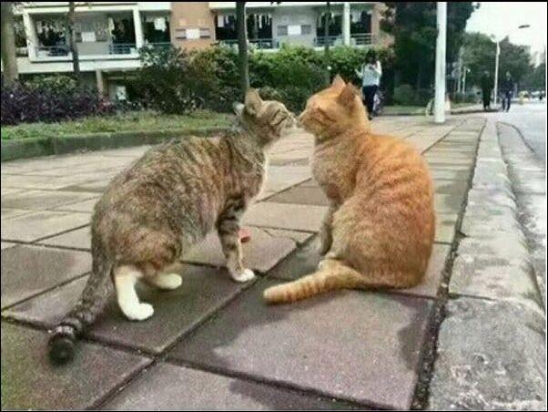 cats-cats-30122016-001