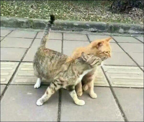 cats-cats-30122016-002