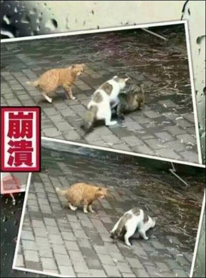 cats-cats-30122016-003
