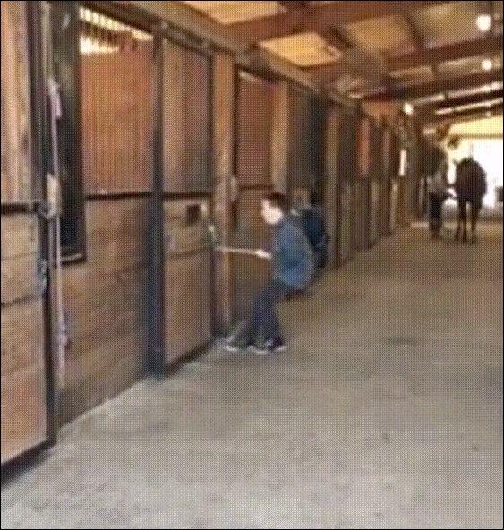 tiny-horse
