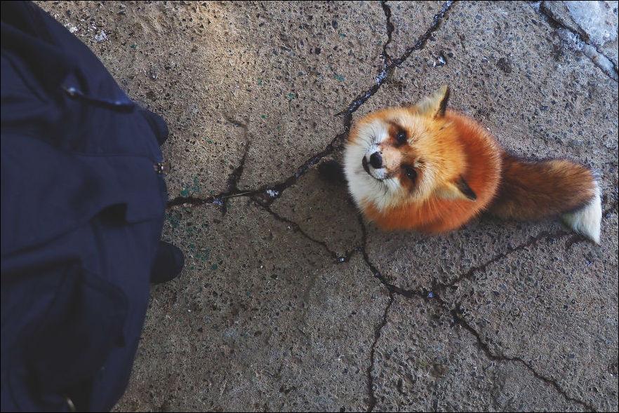 fox-village-003