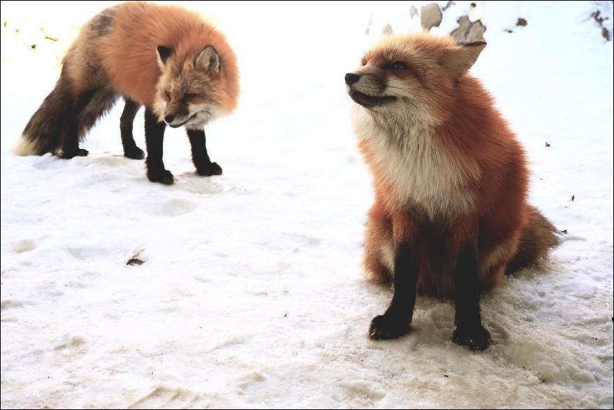 fox-village-004