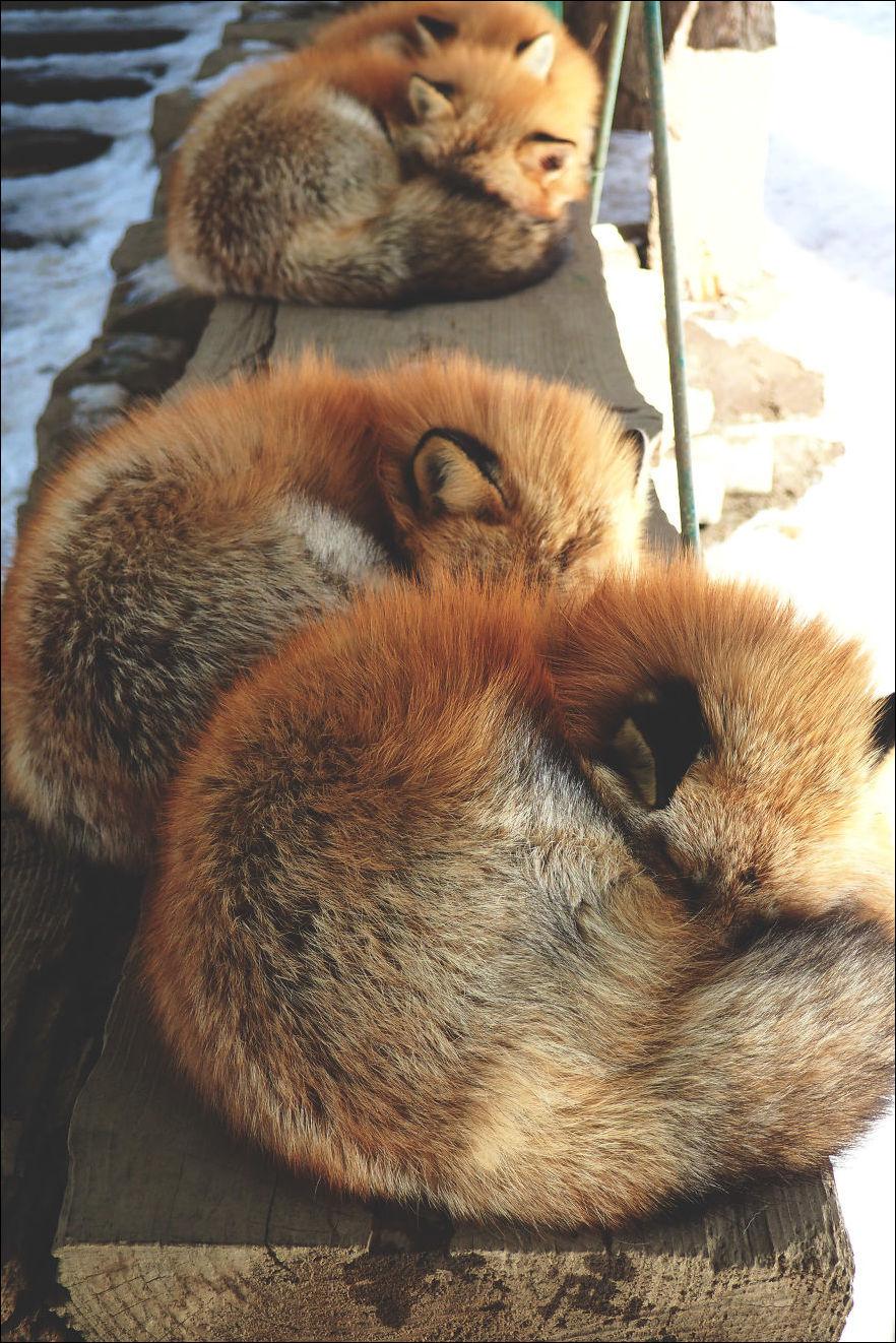 fox-village-005