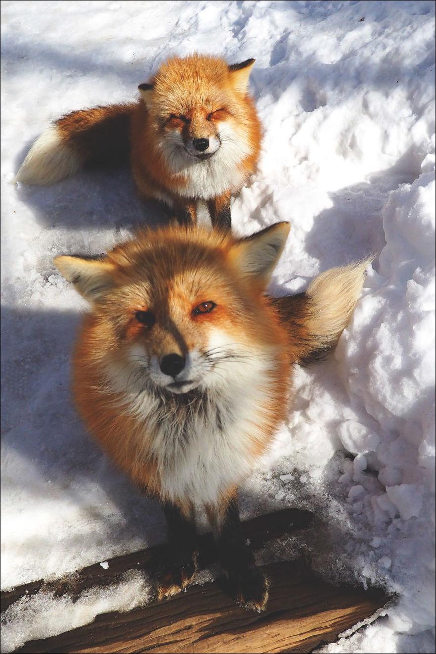 fox-village-006