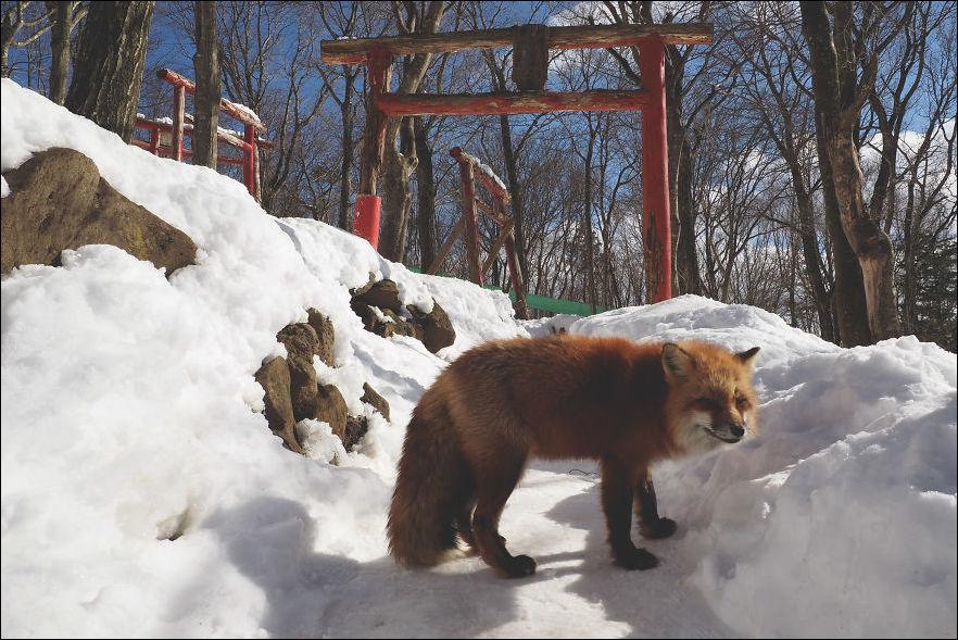 fox-village-008
