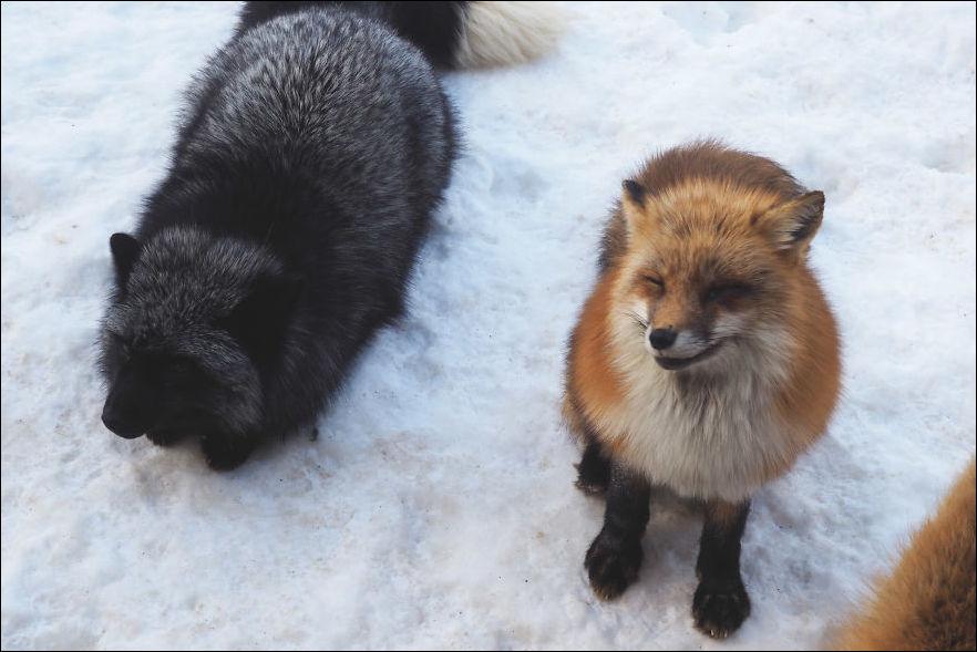 fox-village-009
