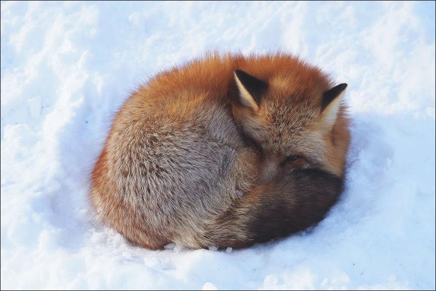 fox-village-011