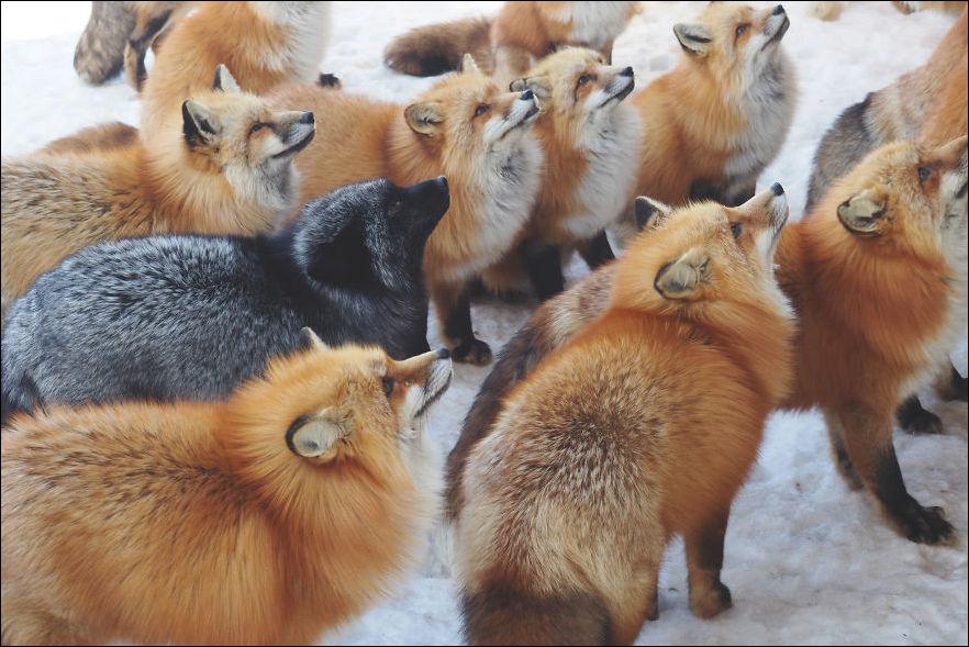 fox-village-013