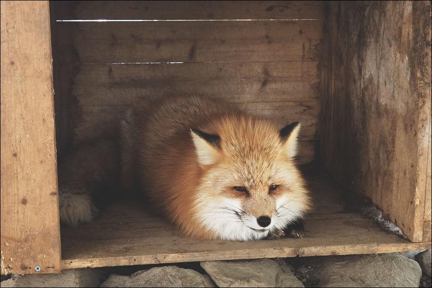 fox-village-014