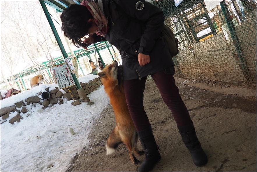 fox-village-015
