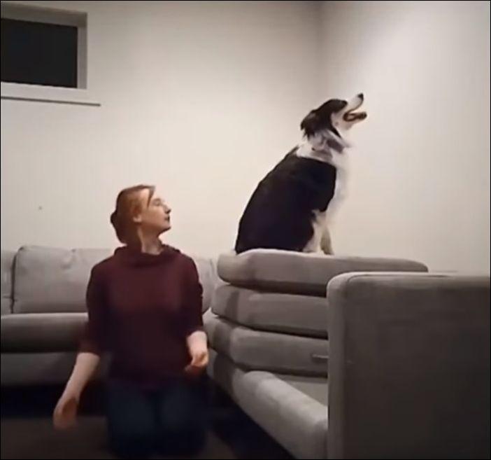 amazing-dog