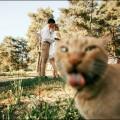 коты фотобомберы